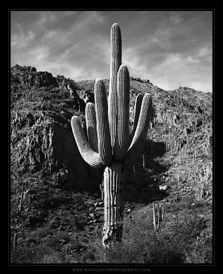 saguaro_cactus_superstition_mountains-01L.jpg